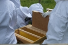 Ankunft der Bienen in Willich